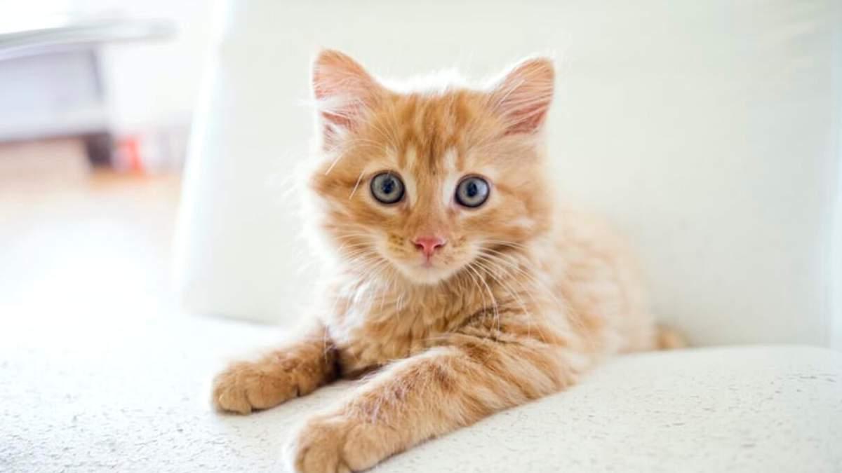 День рыжих котов: интересные факты о рыжих котах