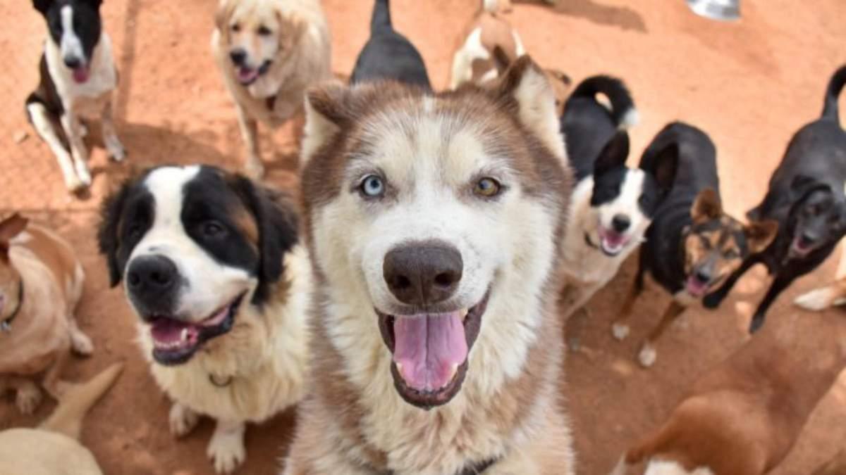 Стали короче лапы и увеличилась челюсть: как известные породы собак изменились за 100 лет - Pets