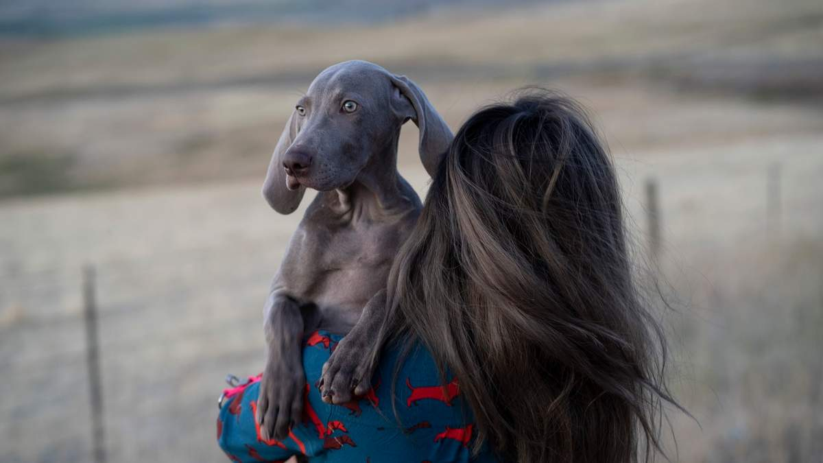 Імунітет та здоров'я домашніх улюбленців: що потрібно знати кожному власнику - Pets