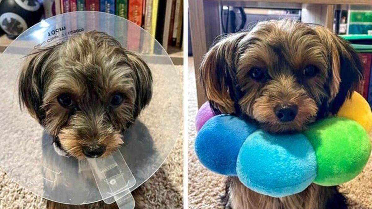 """Власники """"приборкали"""" своїх тварин кумедними способами: курйозні фото - Pets"""