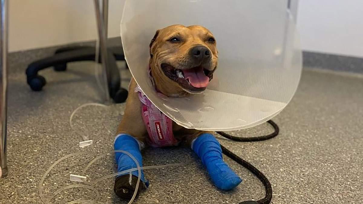 Собака-геройка врятувала свого брата від укусу змії: подробиці інциденту - Pets