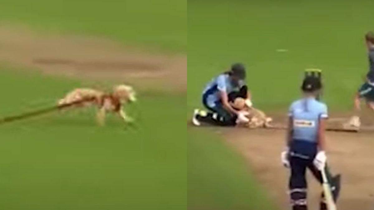 У Британії пес вибіг на поле для крокету й поцупив м'яч: курйозне відео - Pets