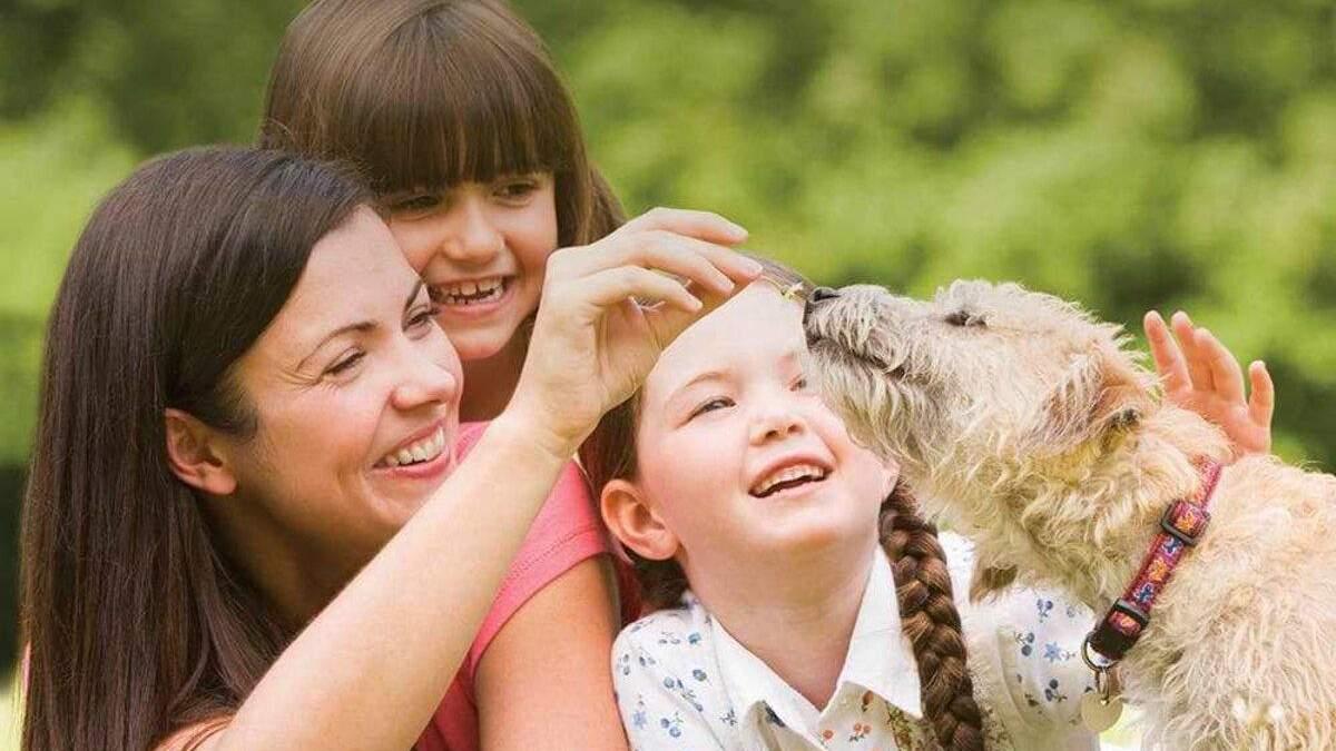 Гра для дітей від Purina® та Happy Paw: як стати учасником розіграшу - Pets