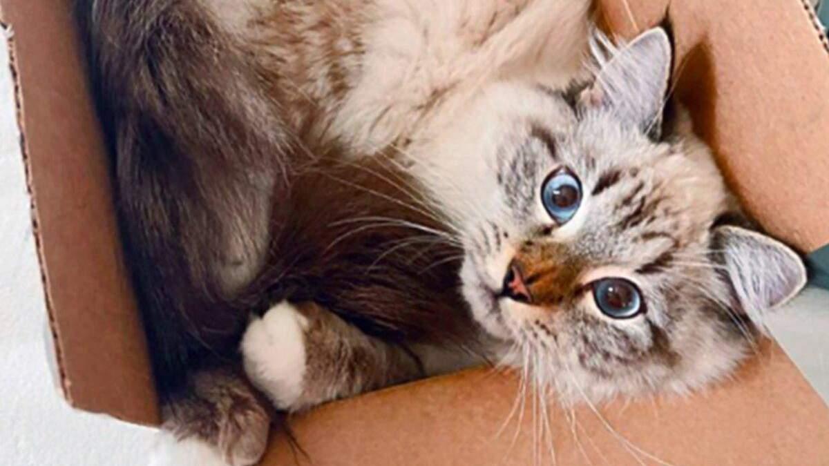 Коты в коробках, которые стали звездами инстаграма: 10 веселых фото - Pets