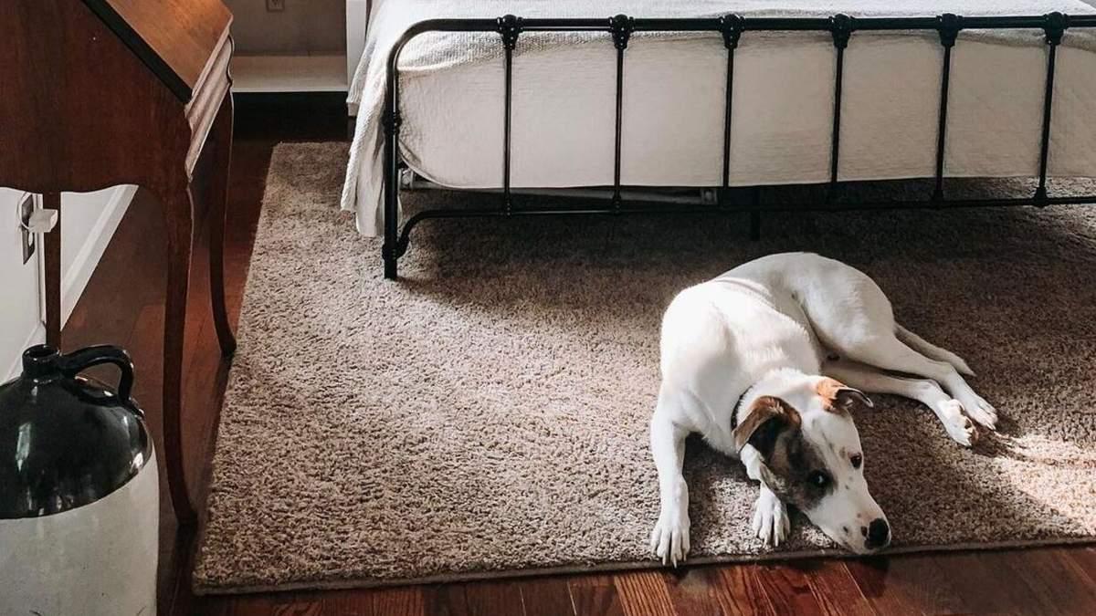 Собачка проверяет сон своей семьи, пока она спит: самое милое видео дня - Pets