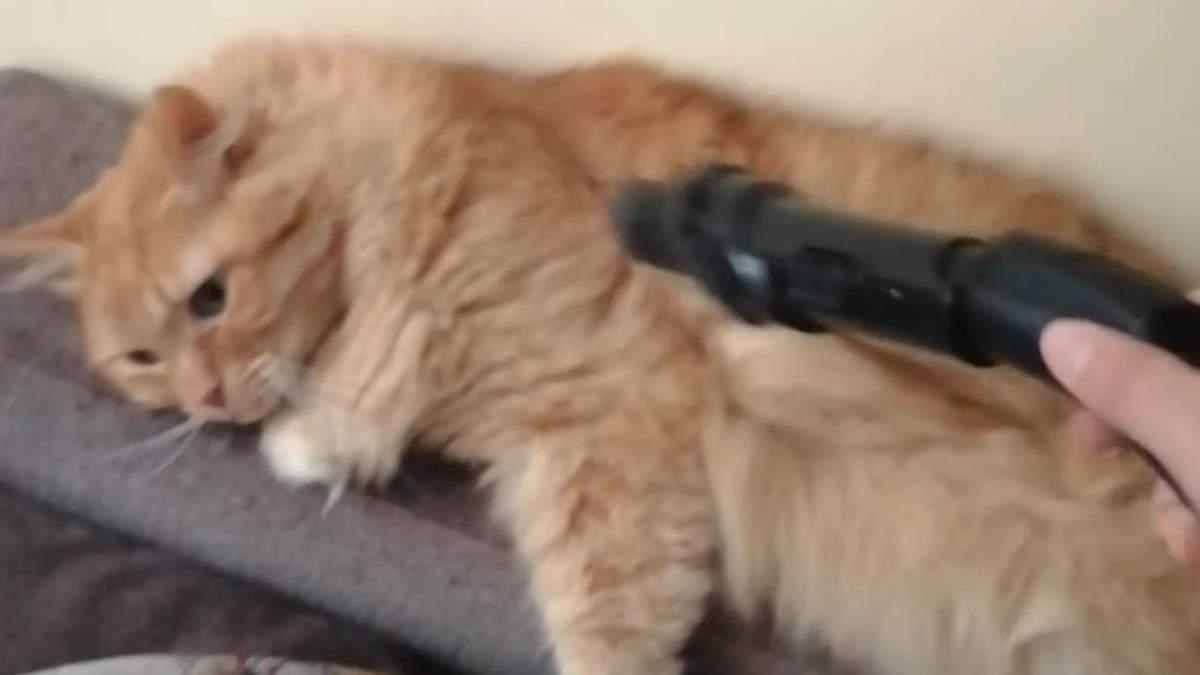 Кот обожает, когда его пылесосят: видео дня - Pets