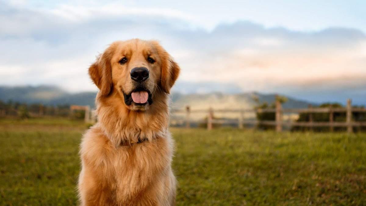 Як зробити життя собаки здоровішим та щасливішим: 5 дієвих методів - Pets