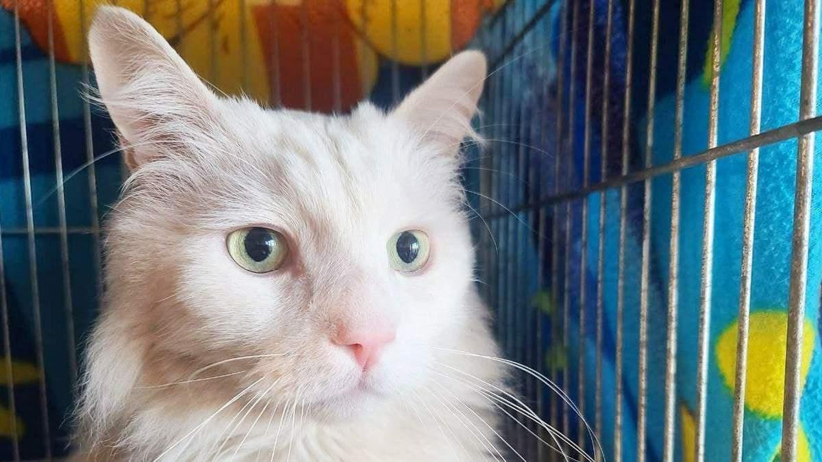 Киевляне усыновили 133 кошки на выставке беспородных животных: трогательные фото - Pets