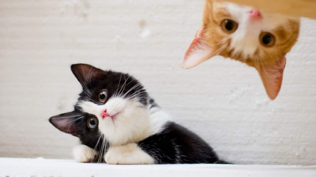 Як можна весело та корисно розважити улюбленого кота - Pets