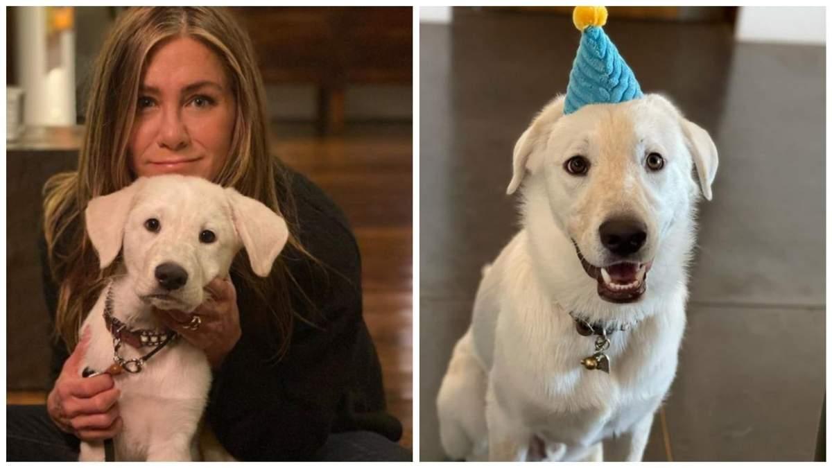 Дженніфер Еністон взяла песика з притулку: як виріс малюк - Pets