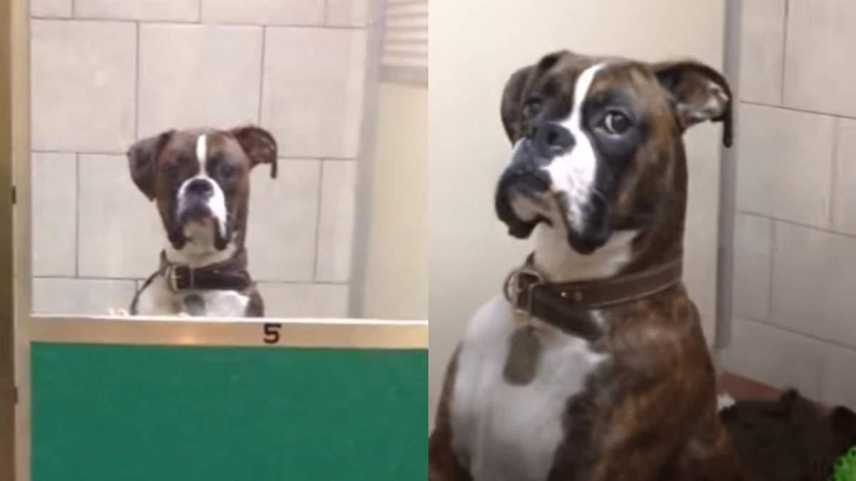 """Пес """"грізно"""" зустрів господаря з відпустки: кумедне відео - Pets"""