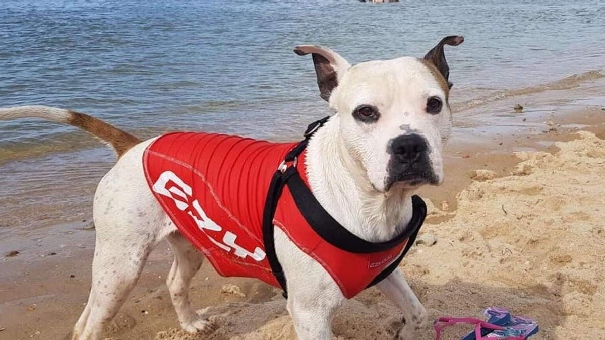 Дозволив вхопитися за жилет: пес врятував хлопчика, що не впорався з хвилями океану - Pets