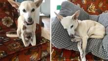 Что-то пошло не так: забавные фото собак, которые нарушают законы физики