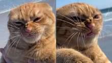 Невдало скривив мордочку: фото кота, який ненавидить пляж
