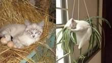Люди сміються над кішками, які вляглися відпочивати у несподіваних місцях: курйозні фото