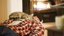 Чому кіт лягає спати на вас: цікаве пояснення