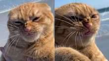 Неудачно скривил мордочку: фото кота, который ненавидит пляж