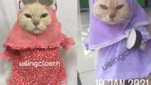 Кошачья мода: животные в хиджабах покоряют сеть