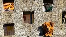 12 распространенных вещей, которыми вы вредите своей собаке