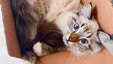 Коти у коробках, які стали зірками інстаграму: 10 веселих фото