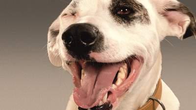 Новинка Dog Chow® з лососем: для дорослих собак, схильних до алергії