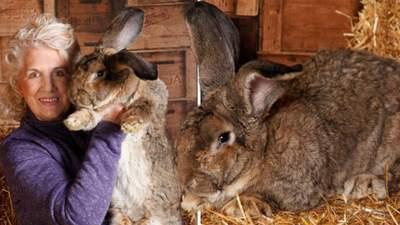 В Англії викрали найбільшого у світі кролика: власниця пропонує велику нагороду