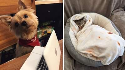 Люди купили своим собакам и кошкам смешные товары: фото