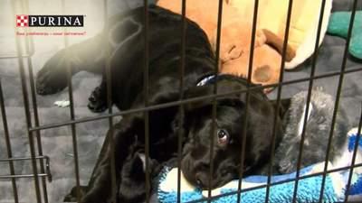 Чтобы спасти щенка: мальчик тайком от мамы продавал самое ценное, что имел