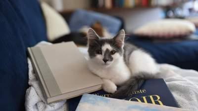 О доброте, мечтах и дружбе: подборка интересных детских книг о котиках
