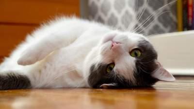 Як зробити життя кота безпечним: 8 порад для кожного власника