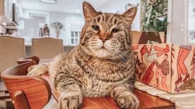 Майже лев: через гігантський розмір цього кота ніхто не хотів брати з притулку – фото