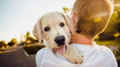 Purina Graduate Program: как стать специалистом в области ветеринарии и бизнеса