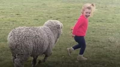 Осиротевший ягненок бегает за своей маленькой хозяйкой как пес: щемящее видео