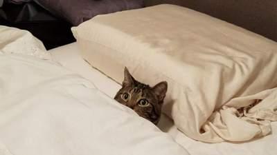 Спят как люди: милые и забавные фото котиков, которые умеют отдыхать правильно