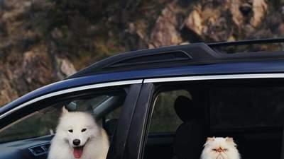 Улыбающийся пес Каспер и мрачный кот Ромео стали неразлучными друзьями
