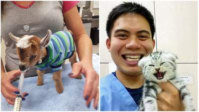 Найсимпатичніші пацієнти ветеринарів: добірка унікальних фото