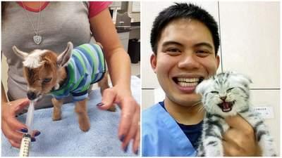Самые симпатичные пациенты ветеринаров: подборка уникальных фото