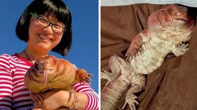 Огромная домашняя ящерица стала звездой инстаграма: впечатляющие фото