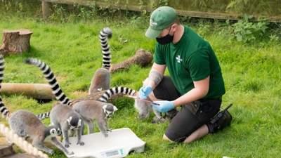 Від носорогів до метеликів: у зоопарку Whipsnade зважили майже 10 тисяч тварин