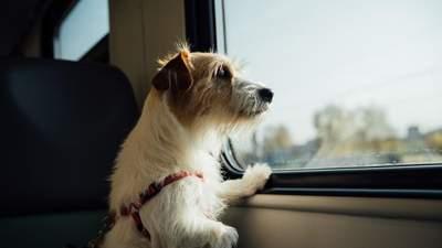 Літають з тваринами: чому все більше мандрівників винаймають приватні літаки для котів і собак