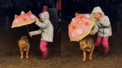 Закривала своєю парасолею, а сама мокла: як дівчинка намагалася сховати собаку від дощу