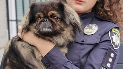 """Пекінес """"чергував"""" у поліції в Рівному: як загубленого пса повернули власниці"""