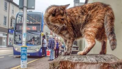 Пухнаста втікачка: кішка проїхала автобусом, аби дістатися моря