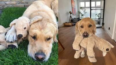 Мягкий брат-близнец: собака никуда не ходит без любимой игрушки