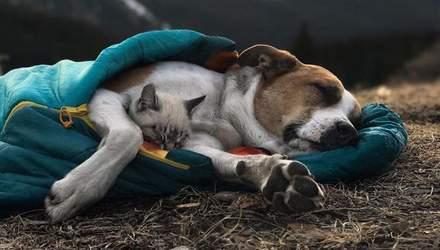 Дружба між собакою та котом – існує: фото наймиліших мандрівників