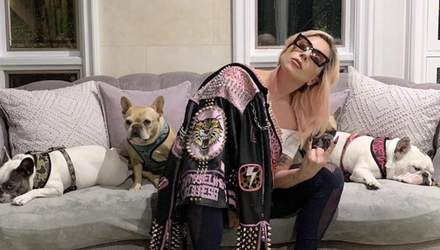 Неизвестные украли собак Леди Гаги и подстрелили помощника певицы