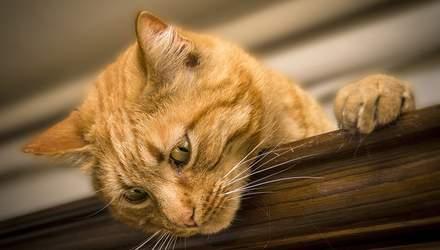 Кот в квартире: практические советы для владельцев