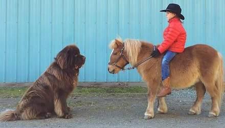 10 собак, не понимающих насколько они большие: советы для владельцев четвероногих гигантов