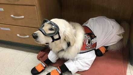 Хвостатый ученый: в США собака работает в научной лаборатории – фото, видео