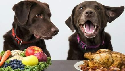 Опасная еда: 7 продуктов с вашего стола, которые нельзя давать собакам